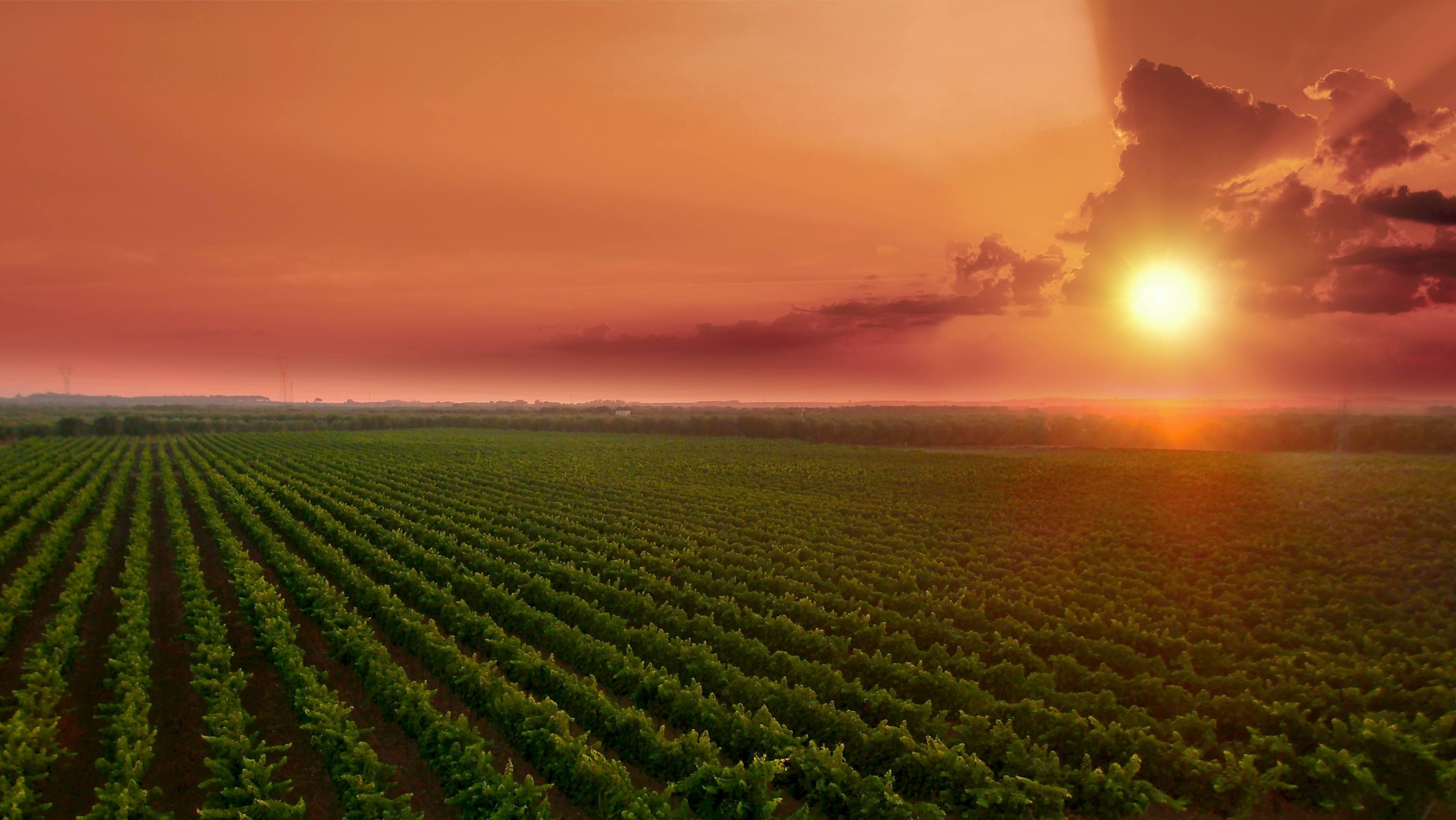 Vinmarker Paolo Leo Økologisk solnedgang